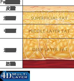 Fat Layer 皮膚 / 浅い層 / 中間層 / 深い層 / 筋肉